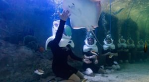 Throw On Your Diving Gear And Swim With Thousands Of Sea Creatures At Odysea Aquarium In Arizona