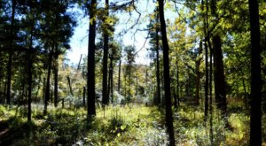 Traverse 128 Miles Of The Sam Houston National Forest On The Lone Star Hiking Trail In Texas