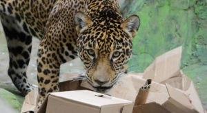 Enjoy A Kid-Friendly Virtual Zoo School From Pennsylvania's Elmwood Park Zoo