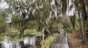 The 7 Most Beautiful Short And Sweet Hikes Near New Orleans