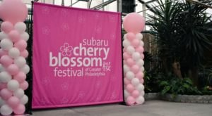The Subaru Cherry Blossom Festival In Pennsylvania Will Have Hundreds Of Trees In Bloom This Spring