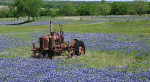 This Bluebonnet Trail In Texas Will Be In Full Bloom Soon And It's An Extraordinary Sight To See