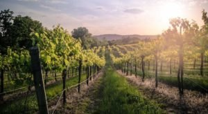 Augusta Winery Is A Vineyard In Missouri That Transforms Throughout The Seasons Of The Year