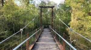 Visit Tickfaw State Park Near New Orleans For A Beautiful Waterside Springtime Hike