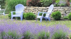 Get Lost In This Beautiful Multi-Acre Lavender Farm In New Hampshire