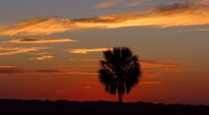 7 Reasons The Sabal Palmetto Tree Is A Beloved Symbol In South Carolina