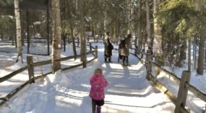 Head To The Alaska Zoo To Walk On Outdoor Trails And View Animals Right Now