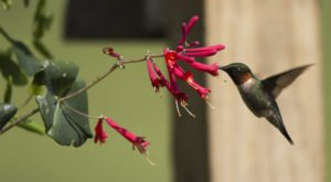 Keep Your Eyes Peeled, Thousands Of Hummingbirds Are Headed Right For Delaware During Their Migration This Spring