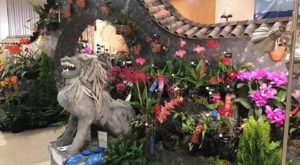 Walk Through A Sea Of Orchids At The North Carolina Orchid Festival At The North Carolina Arboretum