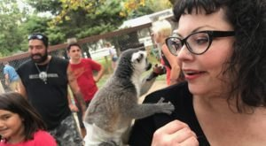 Play With Lemurs, Kangaroos, And More At Bear Den Zoo and Petting Farm In Wisconsin For An Adorable Adventure
