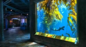 The Monterey Bay Aquarium In Northern California Is Offering Free Livestreams Of Sharks, Jellyfish, And More