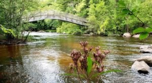Take A Journey Through This McClintock County Park, A One-Of-A-Kind Bridge Park In Wisconsin