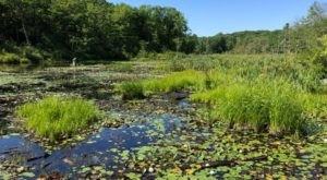 Let The Little Ones Learn About Wildlife At The Roaring Brook Nature Center In Connecticut