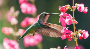 Keep Your Eyes Peeled, Thousands Of Hummingbirds Are Headed Right For Florida During Their Migration This Spring