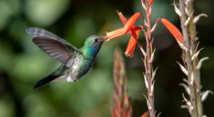 Keep Your Eyes Peeled, Thousands Of Hummingbirds Are Headed Right For Georgia During Their Migration This Spring