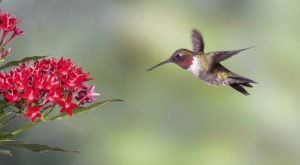 Keep Your Eyes Peeled, Thousands Of Hummingbirds Are Headed Right For South Carolina During Their Migration This Spring