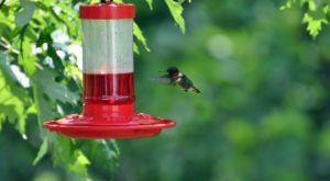 Keep Your Eyes Peeled, Thousands Of Hummingbirds Are Headed Right For Virginia During Their Migration This Spring
