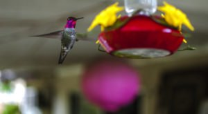 Keep Your Eyes Peeled, Thousands Of Hummingbirds Are Headed Right For Louisiana During Their Migration This Spring