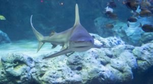The St. Louis Aquarium In Missouri Is Offering Free Livestreams Of Stingrays, Otters, And More