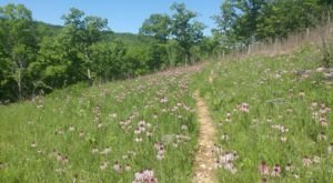 It's Impossible Not To Love This Breathtaking Wild Flower Trail In Missouri