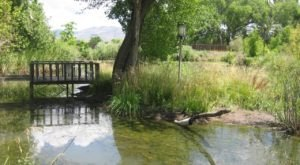 Stay In A Charming New Mexico Cottage With Its Own Pond