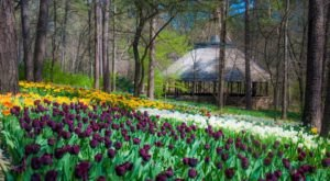 Walk Through A Sea Of Tulips And Daffodils At Arkansas' Garvan Woodland Gardens