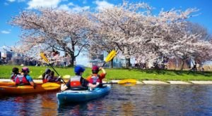 Spend An Afternoon Taking A Delightful Kayak Paddling Tour Through Boston In Massachusetts This Summer