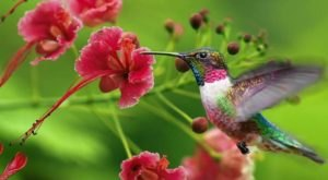 Keep Your Eyes Peeled, Thousands Of Hummingbirds Are Headed Right For New Orleans During Their Migration This Spring