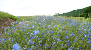 This Spring, Stunning Wildflowers Will Take Over The Meadows At Fort Ransom State Park In North Dakota