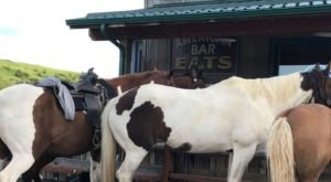 Drink With A Two-Headed Calf At American Bar In Montana