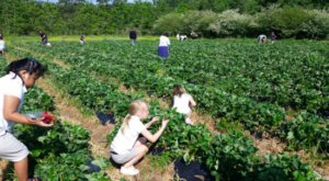 Take The Whole Family On A Day Trip To Mrs. Heather's Pick-Your-Own Strawberry Farm Near New Orleans