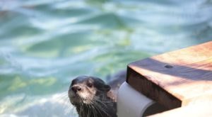 You Can Swim With Otters At Nurtured By Nature In Southern California
