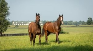 Visit Famous Horse Farms In Kentucky On These Virtual Tours Of Horse Country