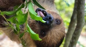 Play With Sloths At Wild Florida For An Adorable Adventure
