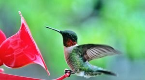 Keep Your Eyes Peeled, Thousands Of Hummingbirds Are Headed Right For Pennsylvania During Their Migration This Spring
