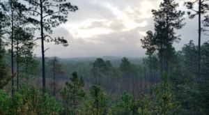 The Treetop Views At The Longleaf Vista Trail In Louisiana Are One Of A Kind
