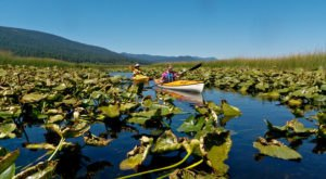 Paddle 9.5 Miles Through A Freshwater Marsh On The Upper Klamath Canoe Trail