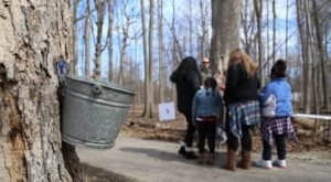 The For-Mar Maple Syrup Festival Has Got To Be The Sweetest Way You Can Spend A Day Near Detroit