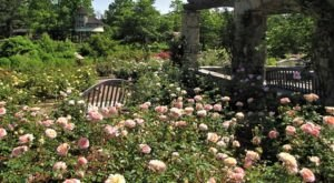 118 Acres Of Beautiful Roses Await You At The Gardens Of The American Rose Center In Louisiana