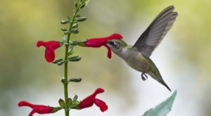 Keep Your Eyes Peeled, Thousands Of Hummingbirds Are Headed Right For Mississippi During Their Migration This Spring