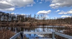 Triangle Lake Bog The Most Remote, Isolated Spot Close To Cleveland And It's Positively Breathtaking