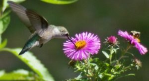 Keep Your Eyes Peeled, Thousands Of Hummingbirds Are Headed Right For Cleveland During Their Migration This Spring