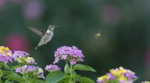 Keep Your Eyes Peeled, Thousands Of Hummingbirds Are Headed Right For Massachusetts During Their Migration This Spring