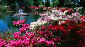 Explore 40 Acres Of Vibrant Blooms At The Azalea Festival In Oklahoma