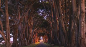 You Can Drive Up To Northern California's Amazing Natural Wonder Cypress Tree Tunnel To See It With Your Own Eyes
