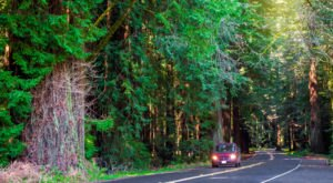 The 31-Mile Avenue Of The Giants In Northern California Is Lined By The Most Majestic Redwood Trees