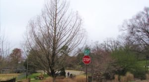The Newest Champion Tree In Arkansas Is A Towering Giant