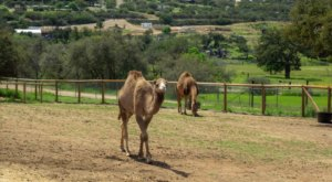 Discover Over 100 Animals At The Children's Nature Retreat, A 20-Acre Ranch In Southern California That Will Bring Out The Kid In Everyone