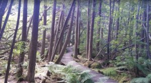 Douglas State Forest Trail Is A Boardwalk Hike In Massachusetts That Leads To A Secret Swamp