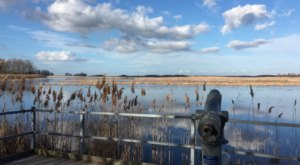 Get To Know Delaware's Coastal Marshes When You Explore Bombay Hook National Wildlife Refuge
